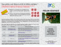 Le frelon asiatique -Comment le reconnaître, signaler les nids et que faire en cas de piqûre